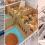 21 de mayo – Envío de pollitos de un día TETRA a Kuwait